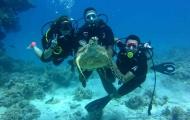 Diving at Sharm El Sheikh